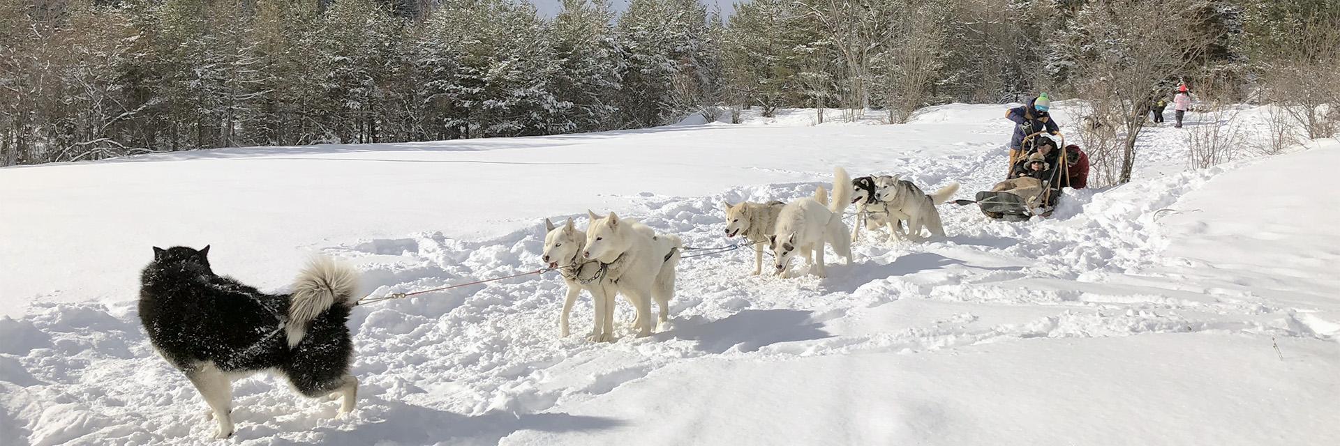 Village_club_vacances_alpes-de-haute-provence-azue-et-neige-hiver-classe-chien