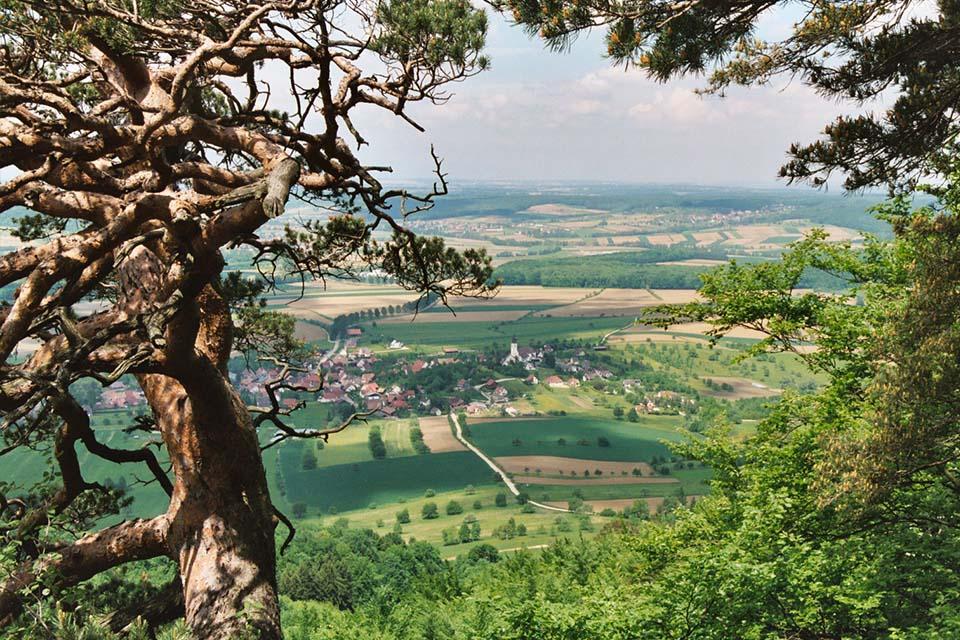 Village_club_vacances_alsace-relais-saint-bernard-vue-arbe-nature
