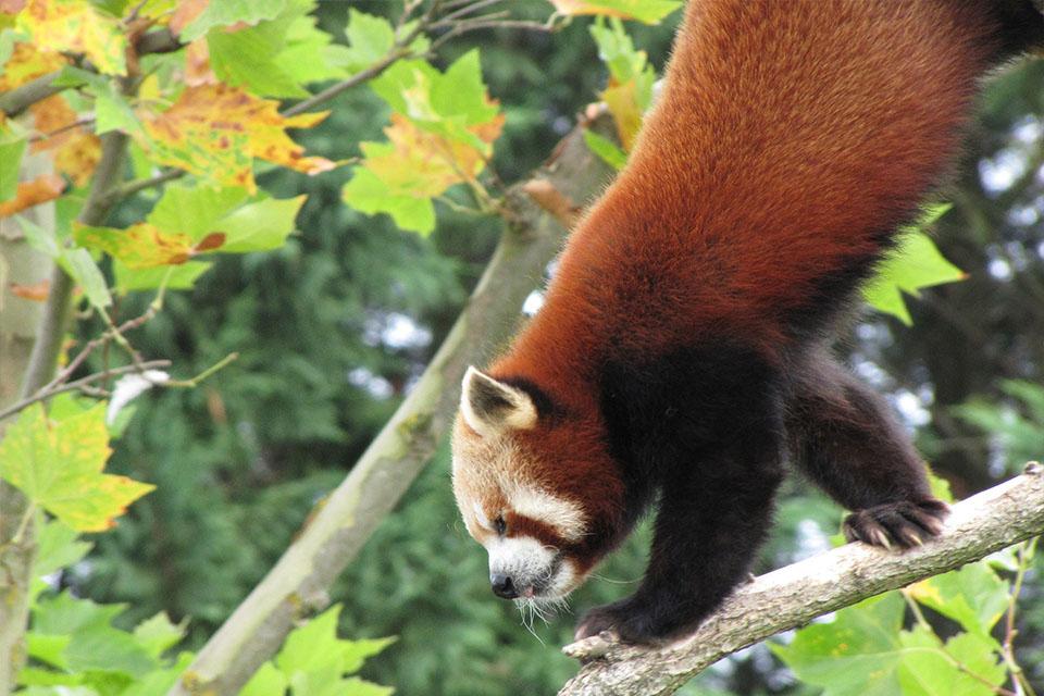 Village_club_vacances_centre-loire-et-bourgogne-la-saulaie-panda-zoo