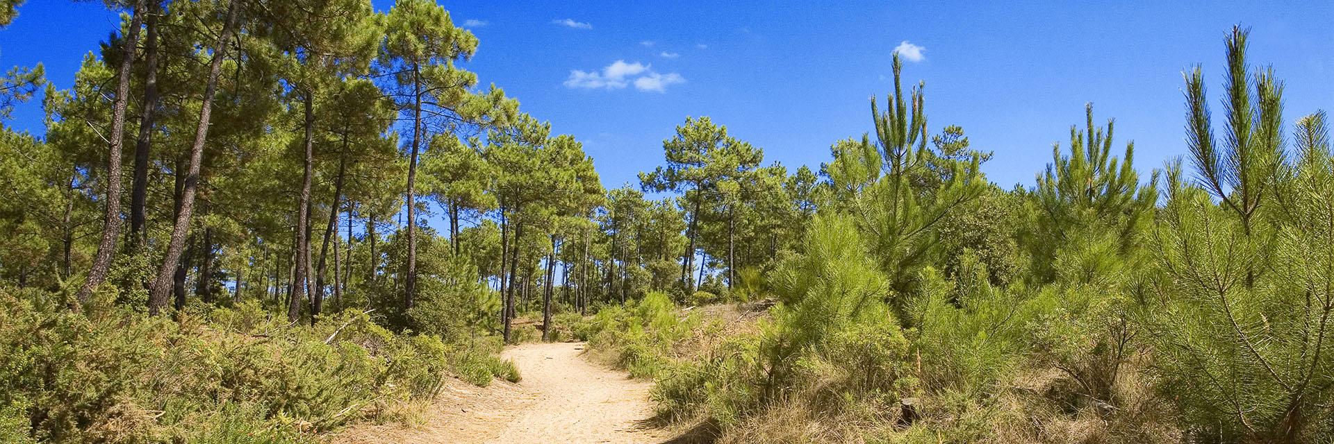 Village_club_vacances_charente-et-landes-arc-en-ciel-oleron-nature-paysage