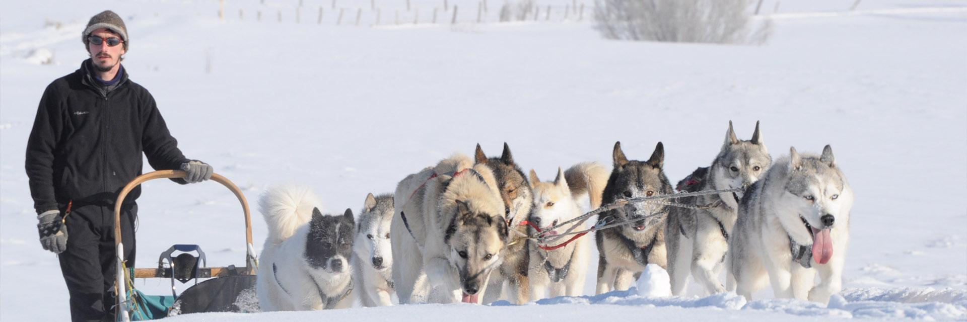 Village_club_vacances_jura-le-duchet-balade-en-chiens-de-traineau-hiver