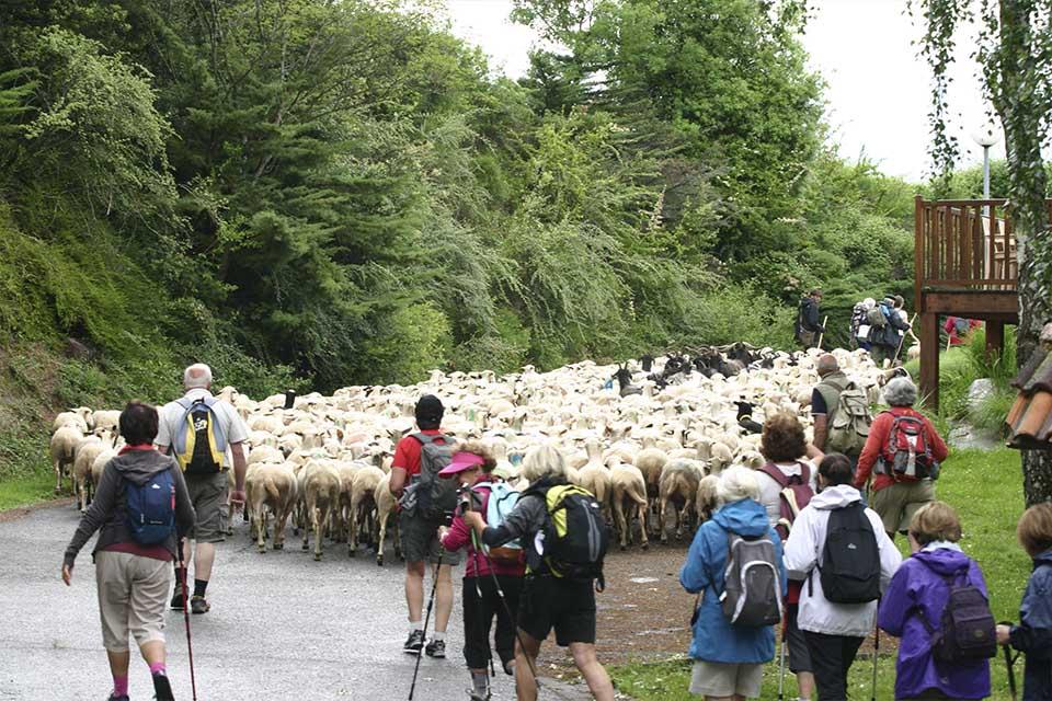 Idée Rando : Transhumance des moutons
