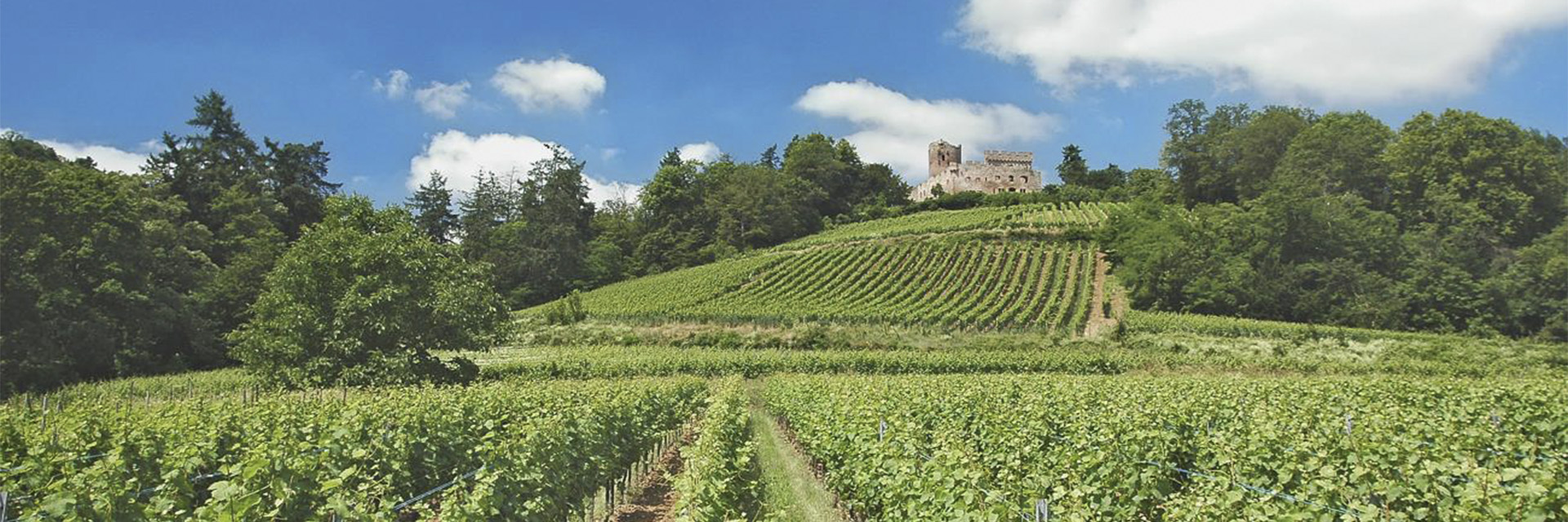 village-vacance-domaine-saint-jacques-vignes