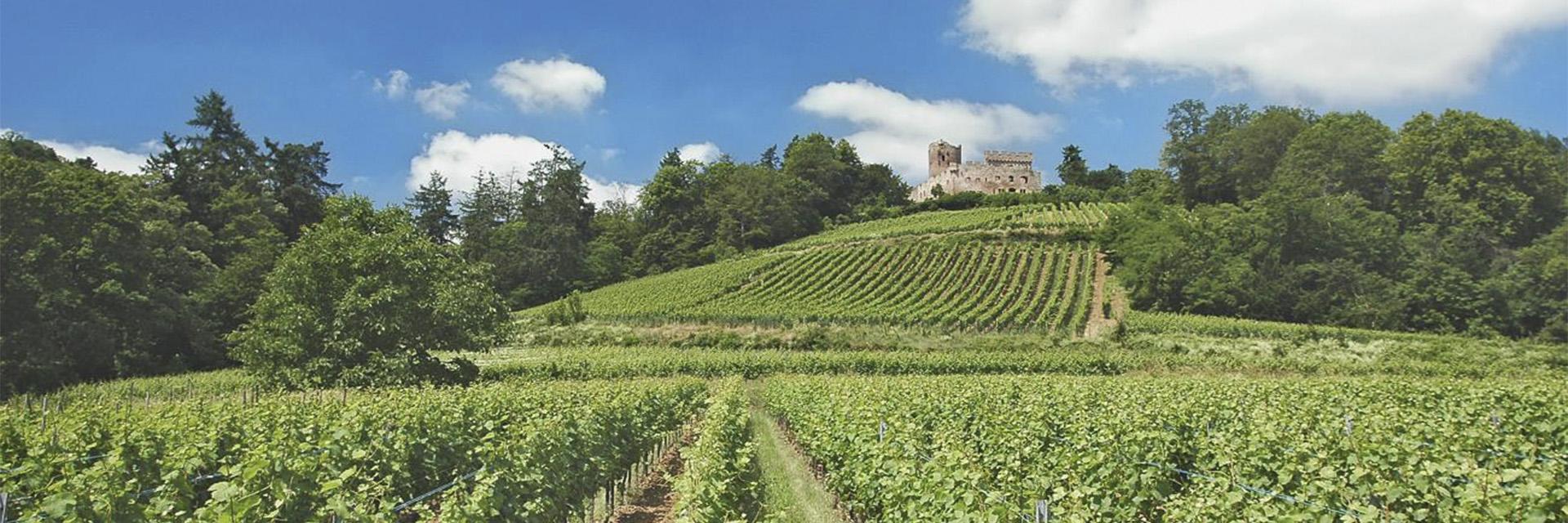 Alsace, entre nature et terroir - Domaine Saint-Jacques