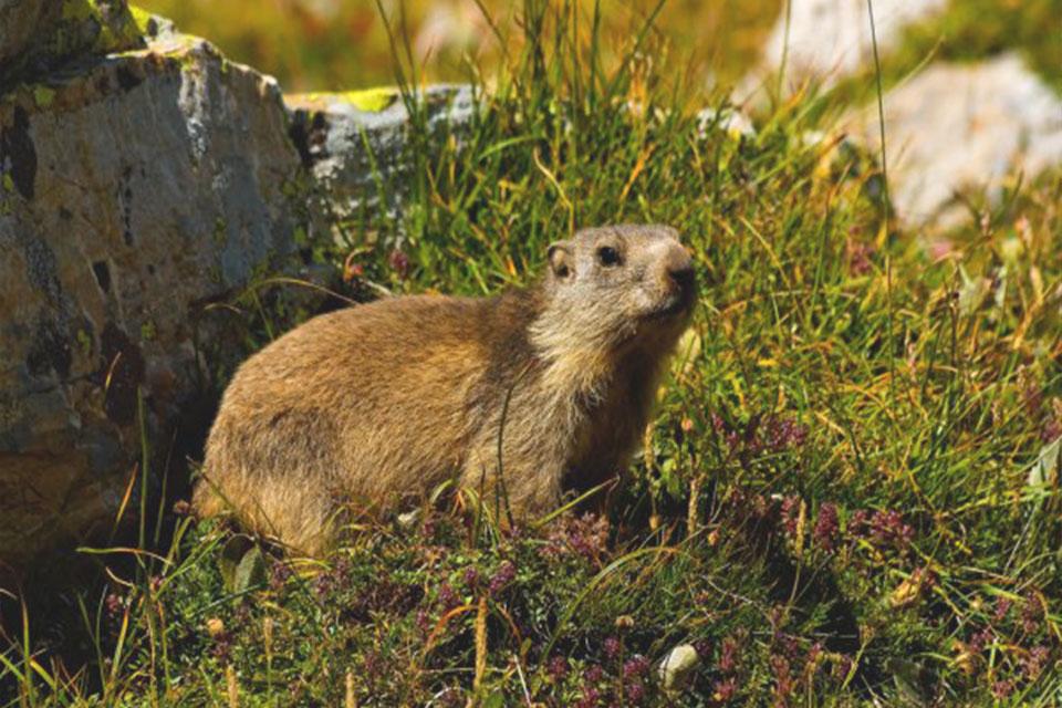 village-vacance-font-d-urle-marmotte