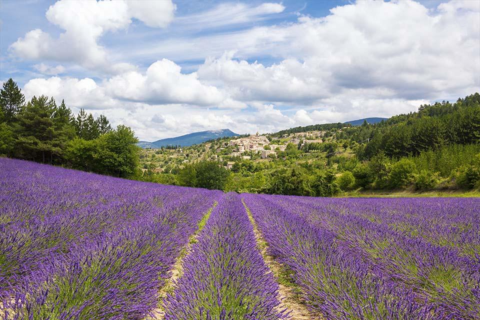 village-vacance-les-lavandes-lavandes-rocher-du-caire