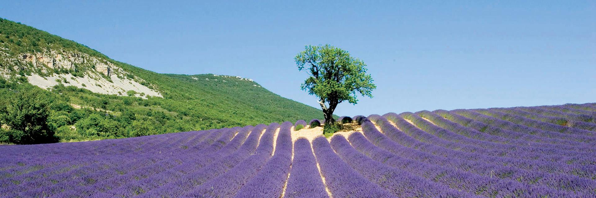 Vos vacances en groupe en Provence et dans le Vercors