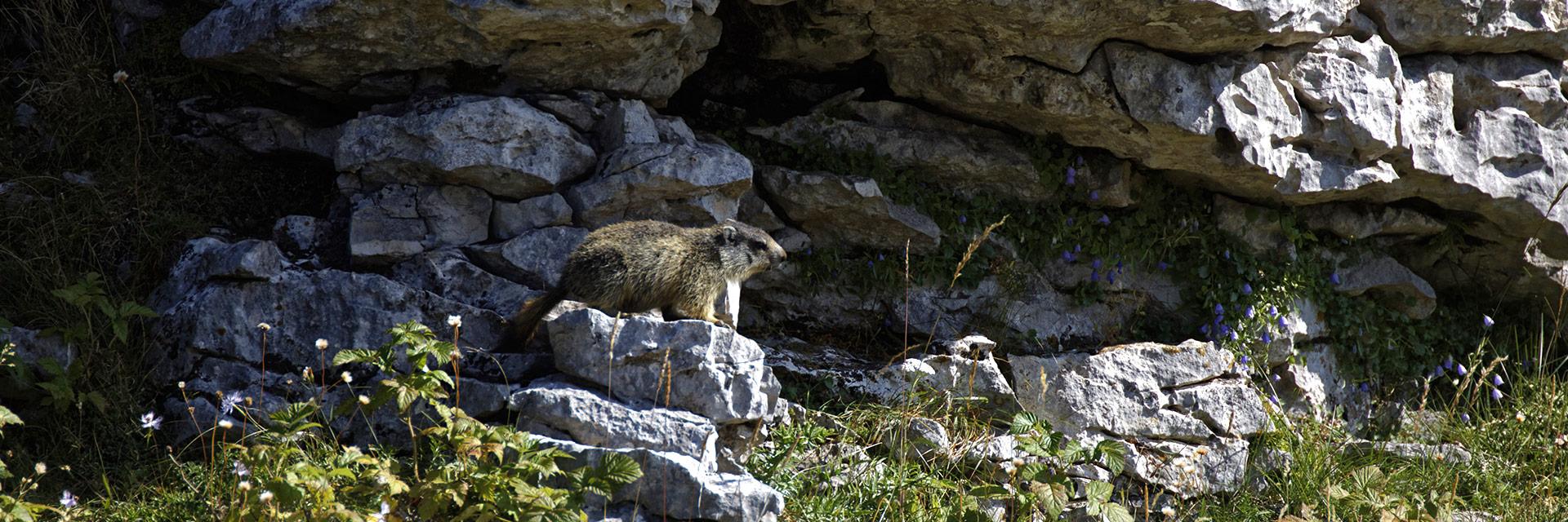 village-vacances-cap-france-font-durle-marmote-montagne