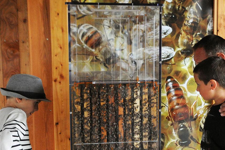 village-vacances-rechastel-activite-abeilles
