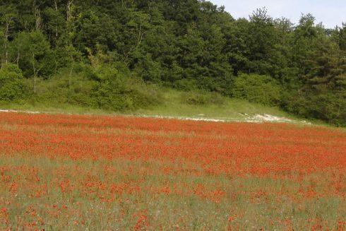 Les Prairies du Fouzon
