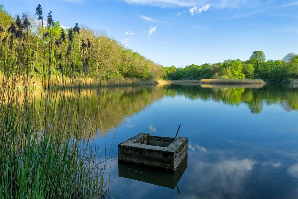 Les étangs de la Bresse jurassiene