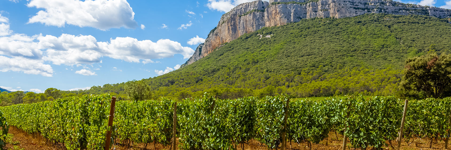 Randonnées camarguaises - Soleil Occitan