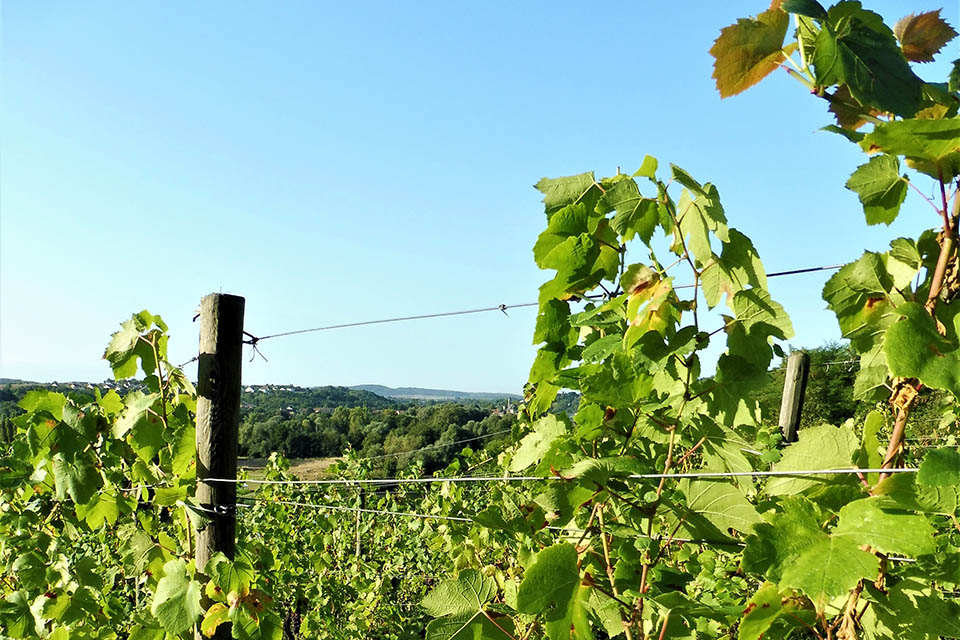 Les Nouveaux vignobles