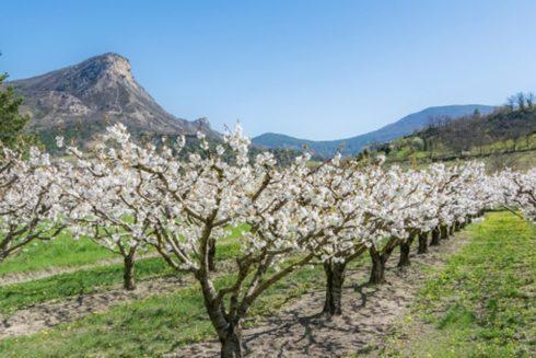 Parc Naturel Régional des Barronies provençales
